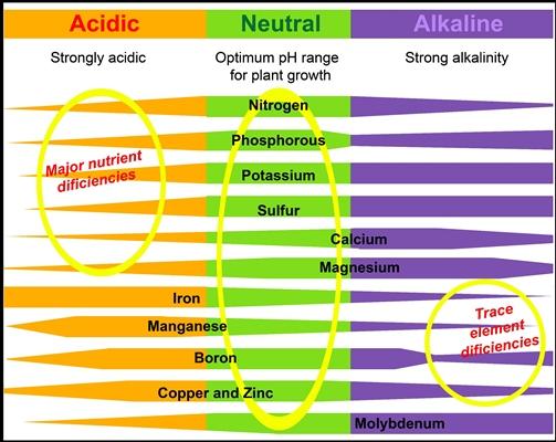Acidic, neutal & alkaline pH chart v2