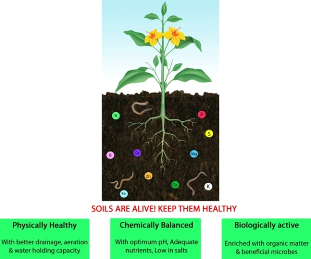 soil health picture2